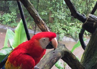 Costa Rica Fauna Parrot