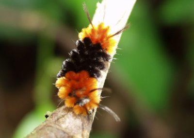 Costa Rica Fauna worm